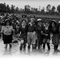 Mondine al lavoro nel dopoguerra