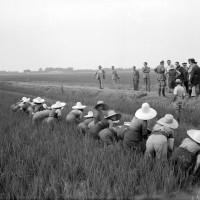 Visita alle mondariso del segretario federale Franz Pagliani insieme al segretario dell'Unione fascista lavoratori agricoltura, Carpi,10 luglio 1941